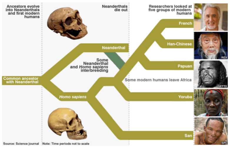 Homo neandertalis